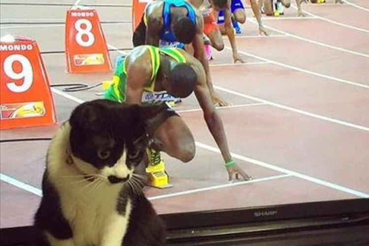 """世界陸上200m走のレーンに""""ニャンコがスタンバイ""""奇跡のショットが話題に"""