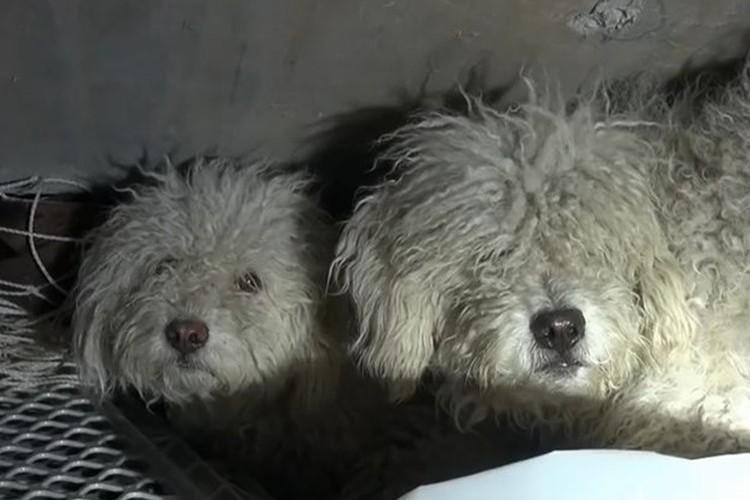 """""""下水道で生き抜いていた兄妹犬""""が救出されて人間に心を開くまで"""