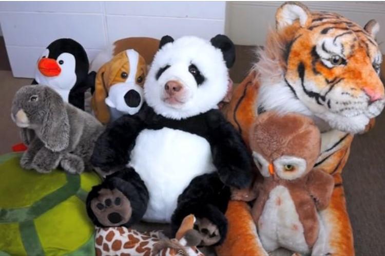 """""""この中に本物の動物が1匹います""""一体どれだか分かりますか!?"""