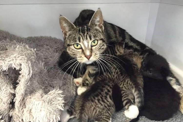【感動の物語】捨てられた仔猫たちを動物病院に迎えにきた猫。母親の愛情で奇跡の再会