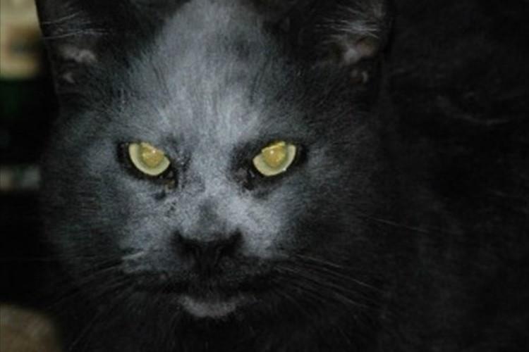 悪魔のような猫。実はおっちょこちょいなカワイイ猫だった