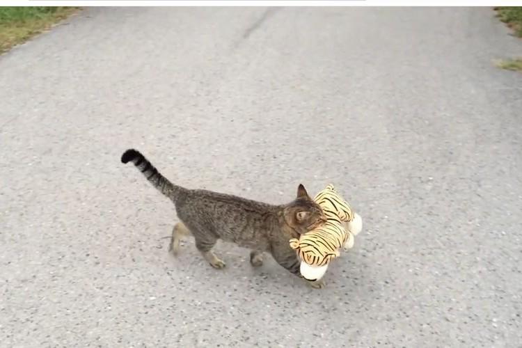 【140万再生】ネコさん、それどうするの?思わず笑顔になるネコのカワイイ行動とは?