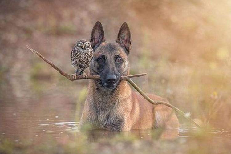 """いつも一緒の犬とフクロウ""""絵本のような幻想的な写真""""にストーリーを感じる"""