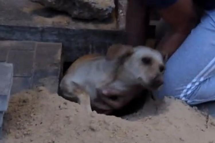 2日間生き埋めにされていた犬を奇跡的に救出!しかも犬は妊娠していた