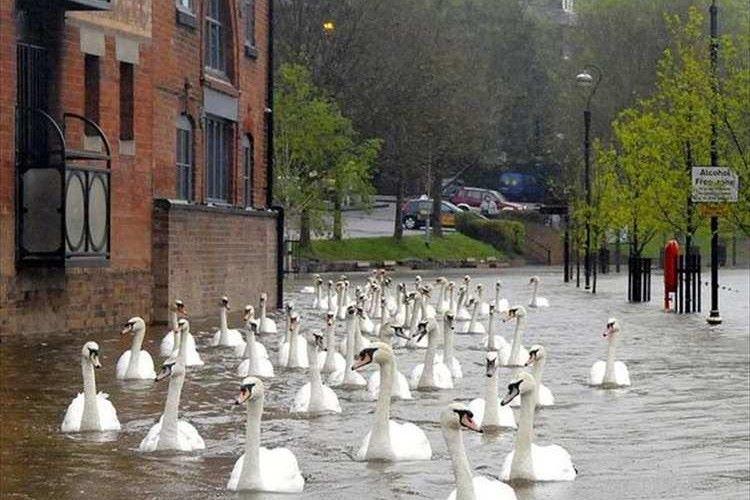 """""""洪水なのに優雅な光景""""イギリスの洪水時の街頭を撮影した1枚の写真が話題に!"""