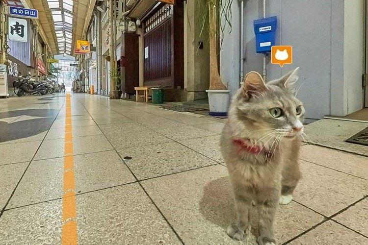 """""""ネコの目線で路地裏を散策できる""""広島県のキャットストリートビューが大人気!"""