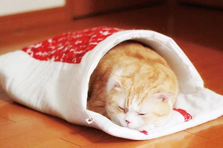 """猫と一緒に""""川の字""""で寝られる♪「猫専用の和布団」""""旅館の和室に寝てるみたい"""""""