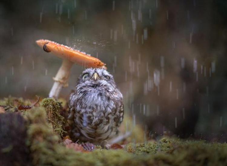 """まるで""""トトロの世界観""""キノコを傘の代わりにして雨宿りするフクロウが話題!"""