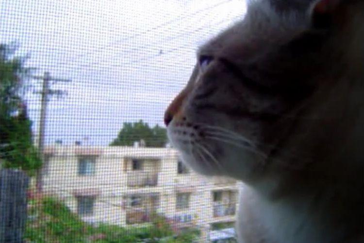 「ネコだよね?」わずか15秒の動画に思わず頬がゆるんじゃう?