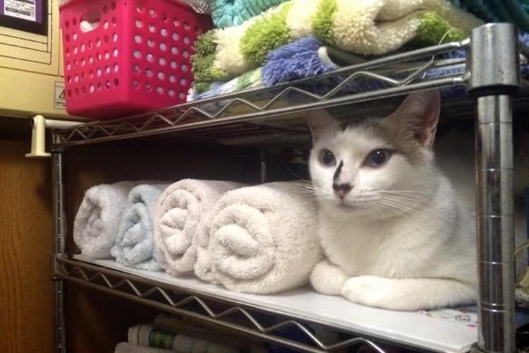 そのタオルを使いたいとの声が続出!思わぬ場所に紛れ込んでいたネコが可愛い