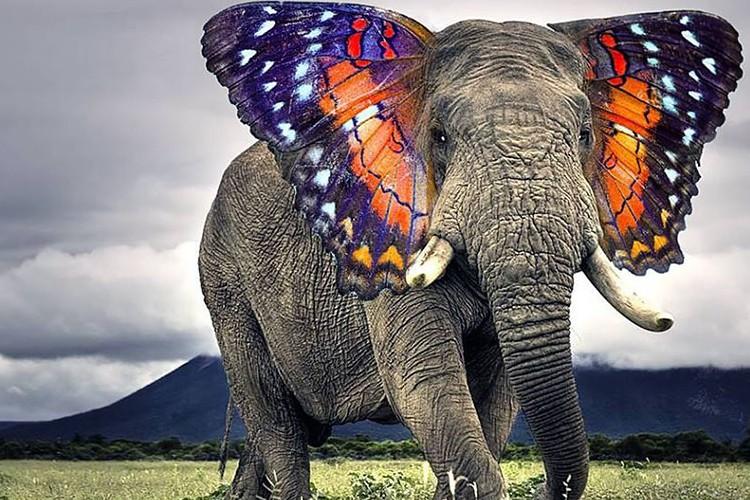 もしも蝶の羽を持つゾウがいたら!?ファンタジーの世界にしかいない動物たち15選