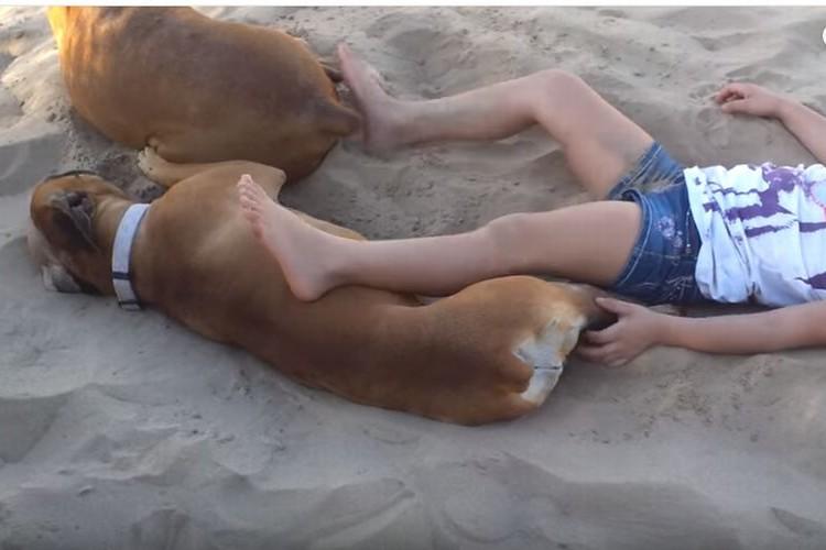 【やり返されちゃった】犬にイタズラした女の子に犬が倍返しだ!