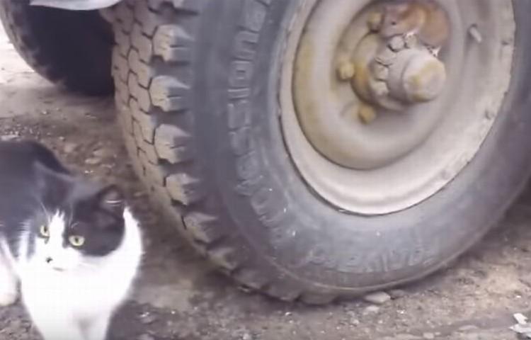 """捜すネコ、動かないネズミのリアル""""トムとジェリー""""の結末は?"""