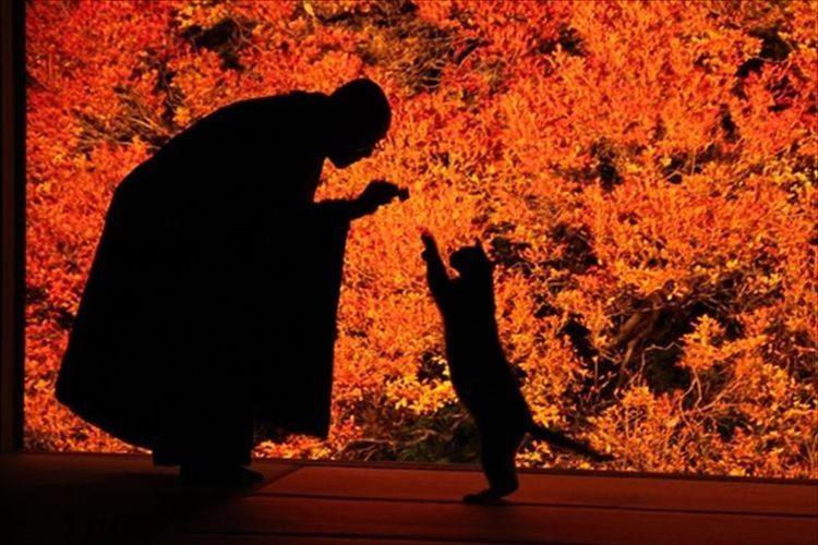 """""""まるで絵画のように美しい""""安国寺のドウダンツツジの紅葉が今年も見頃に!"""