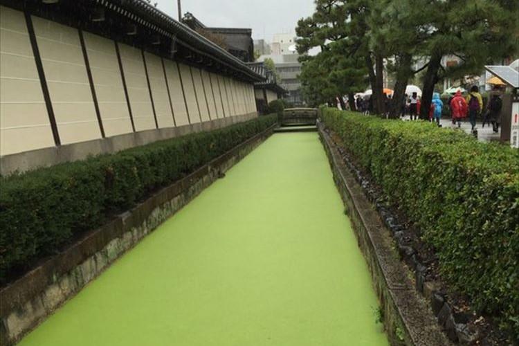 """京都のとあるお堀に""""大量の抹茶""""が流れていた!?と話題に"""