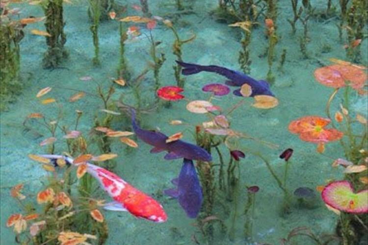 """透き通った水面…""""まるで絵画のような池""""が「モネの池」と呼ばれて話題に!"""