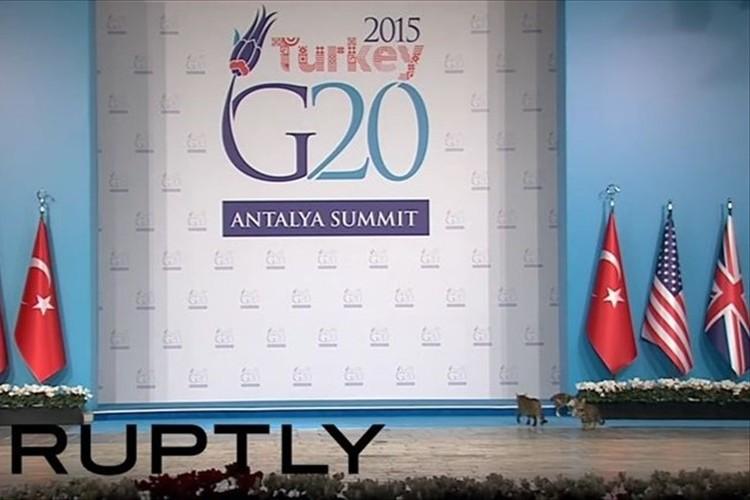 【動画】G20首脳会議に3匹の猫が乱入…「猫の警備員が会議場を点検した」と話題に!
