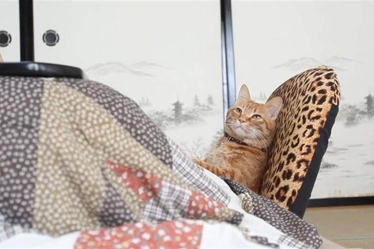 猫はこたつで丸くならなかった…座椅子でくつろぐ猫が休日のオッサンみたいと話題に