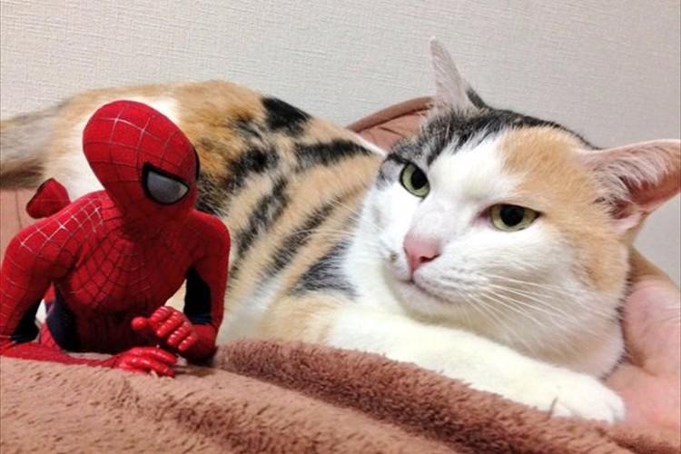 """ツッコミどころ満載!?""""猫の大吉さんとスパイダーマンの絡み""""が絶妙でオモシロイ!"""