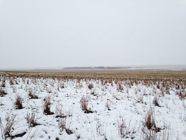 sheep-camouflaged-field-pilgrim-farms-liezel-kennedy-11r