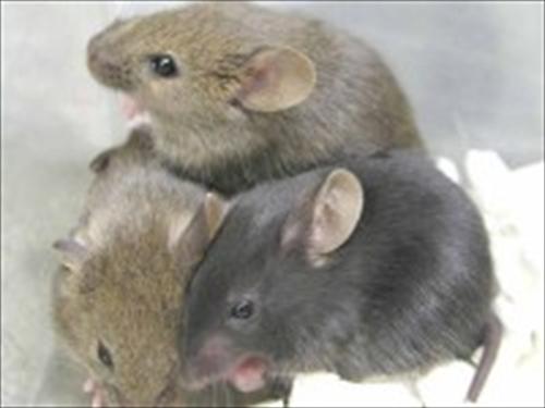 thumbs_mice_1_R