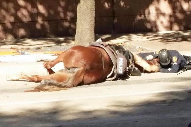 相棒が不運の事故死を遂げた騎馬警官、静かに相棒の最後を看取った1枚の写真