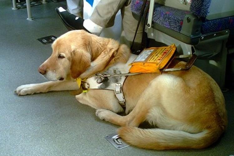 「盲導犬は乗せないで!」バスの運転手の乗車拒否に他の乗客が猛抗議