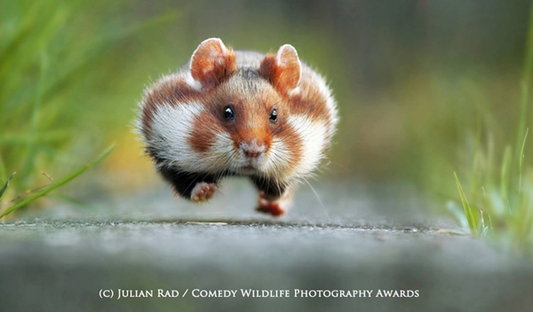 WINNER Comedy Wildlife Photography Awards