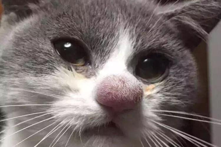 蜂に刺されちゃった...刺された部分がぷっくり腫れてしまったかわいい猫たち