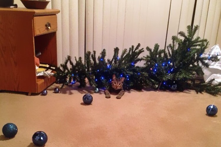 猫にクリスマスツリーを見せてはいけない事がわかる画像15選