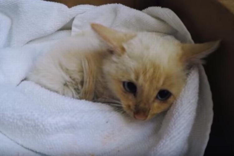 雪に埋もれていた凍死寸前の白い猫。ある家族一丸となって命を救った