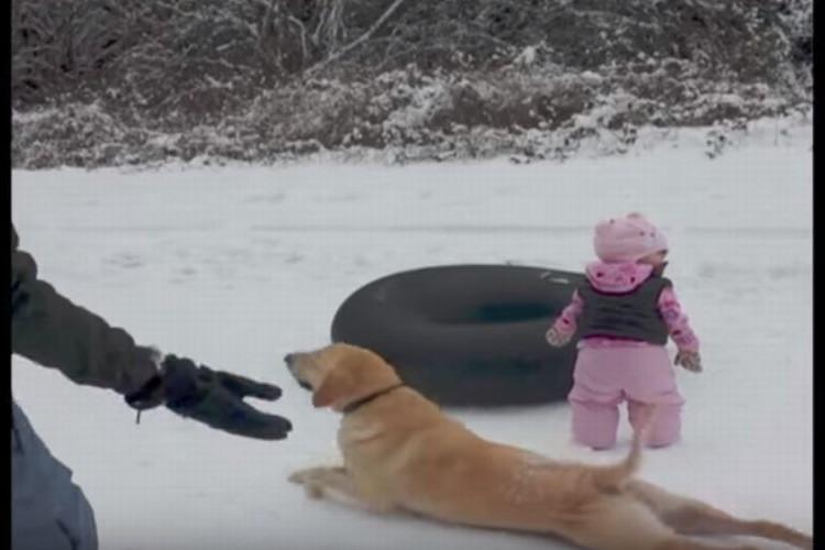 「こうやるんだよ~」赤ちゃんに雪の上を滑る方法を教えるワンコがかわいい