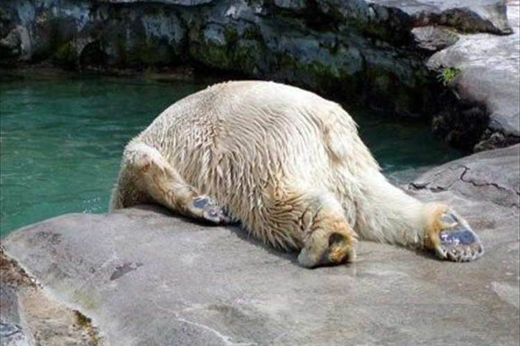 「ね、眠い…もうダメ…zzz」眠気で力尽きてしまった可愛すぎる動物12選!