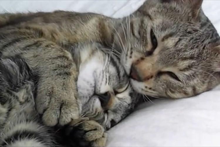 「連れていかないで…」我が子が里親にもらわれる朝、母猫は事態を悟り子供を抱きしめる
