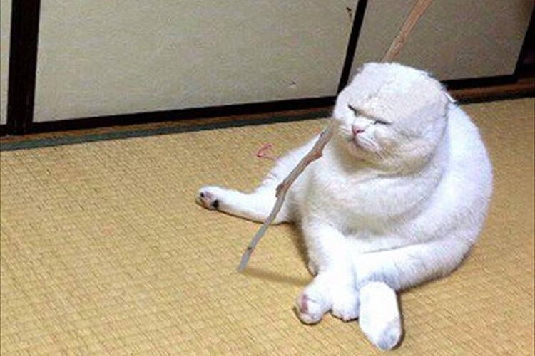 """「ほら、仙豆じゃ」ドラゴンボールの""""カリン様""""にそっくりな猫が発見されて話題に!"""