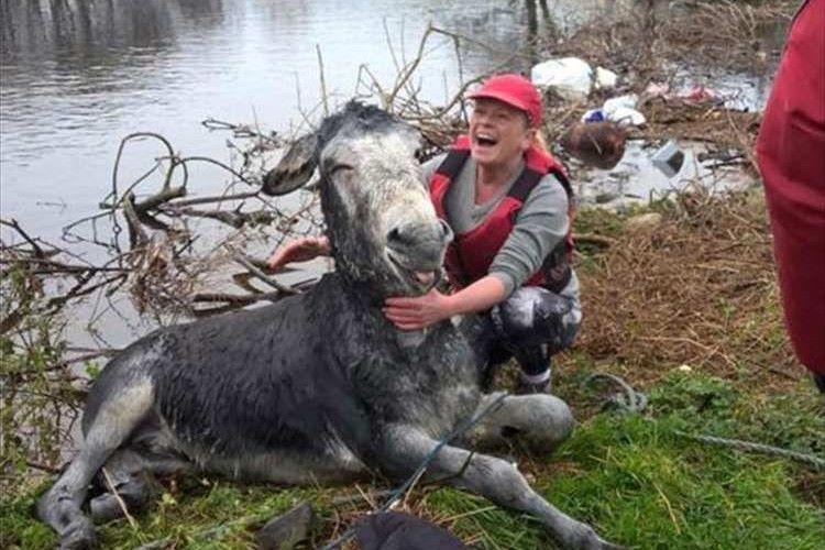 """洪水で溺れていたロバを救出!救出後、安心したロバの""""満面の笑み""""が話題に!"""