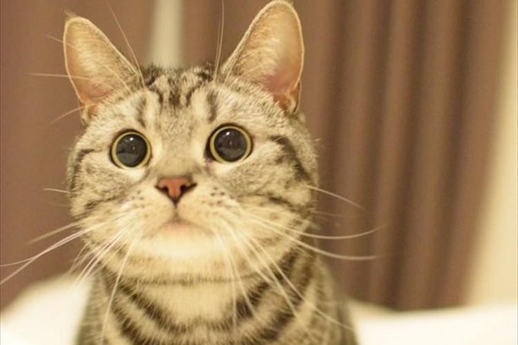 自分が食べるツナ缶を開けている横で、ネコ缶だと信じるキラキラした眼差し