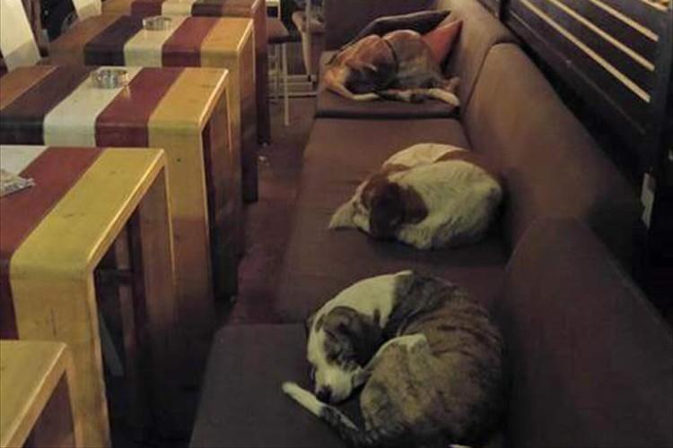 """これなら寒くない""""閉店後、野良犬を毎晩招き入れる""""ギリシャのカフェに愛がある!"""