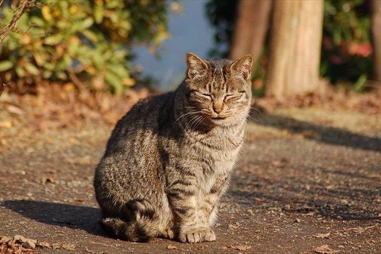 """「千代田区」が""""猫の殺処分ゼロ""""を継続中!共生をめざす素晴らしい取組みだと話題に"""