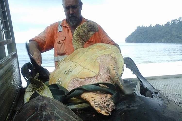 海外の浦島太郎?食用のウミガメを50ドルで買い海へリリース、海外では称賛の声