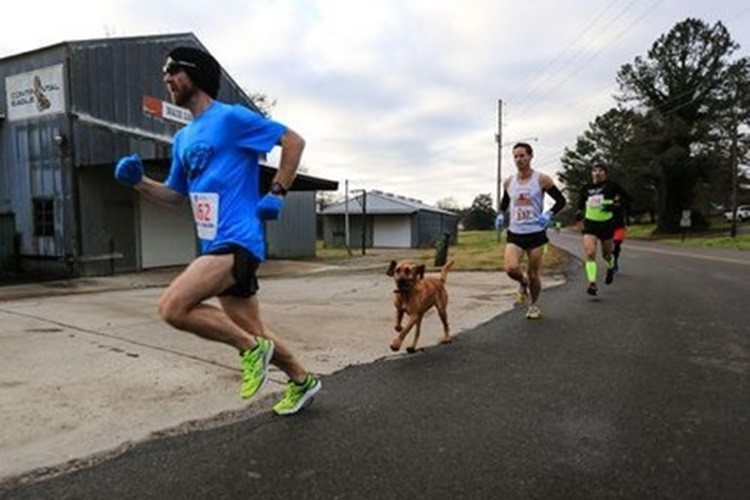 飛び入り参加の犬、ハーフマラソンで7位入賞を果たす