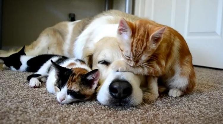 """犬と猫の""""人間の年齢に換算方法""""でしつけや体調管理の目安に"""