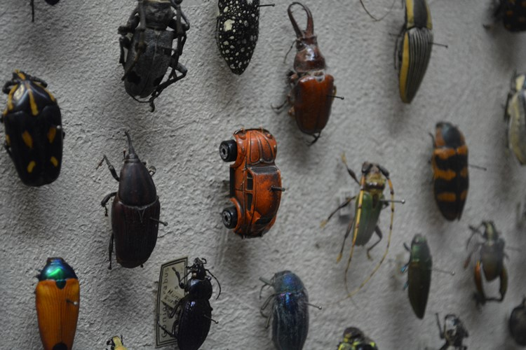 昆虫博物館の標本にカブトムシが!?よ~く見たら