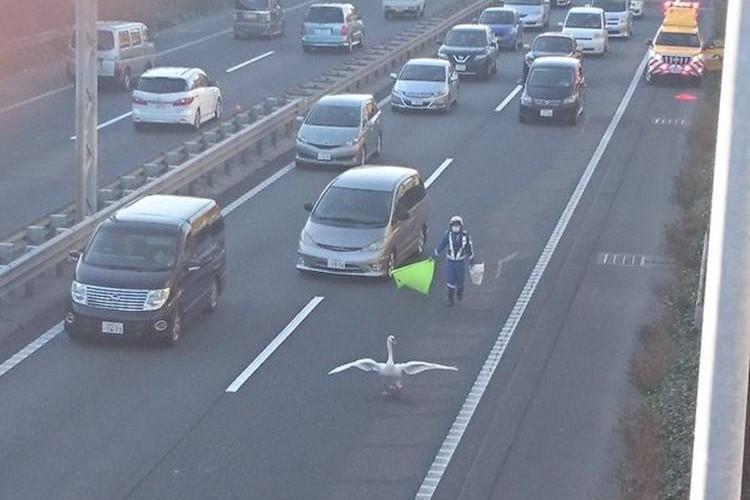 高速道路が10キロの渋滞!原因を作った当事者に思わずほっこり