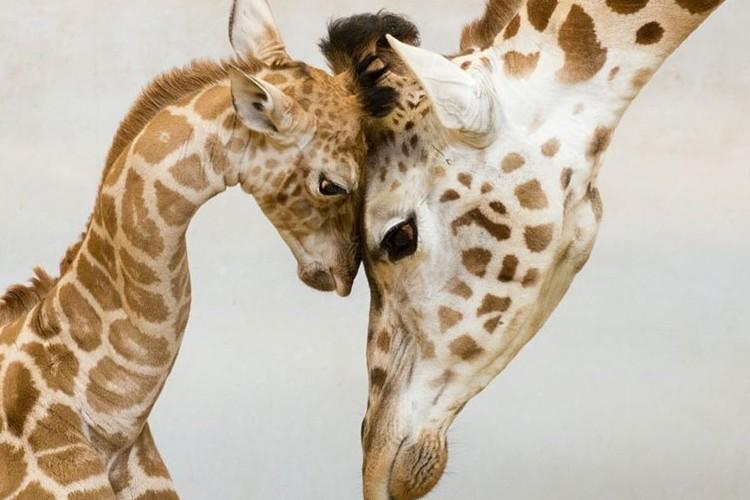 動物たちの親子愛を感じる心温まる写真15選