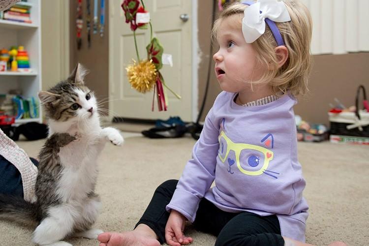 左腕を失った少女が出会った3本足の子猫とすぐに仲良しに