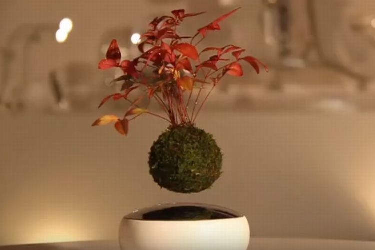 """なにこれ欲しい!宙に浮く盆栽""""空中盆栽(Air Bonsai)""""に心を奪われた"""