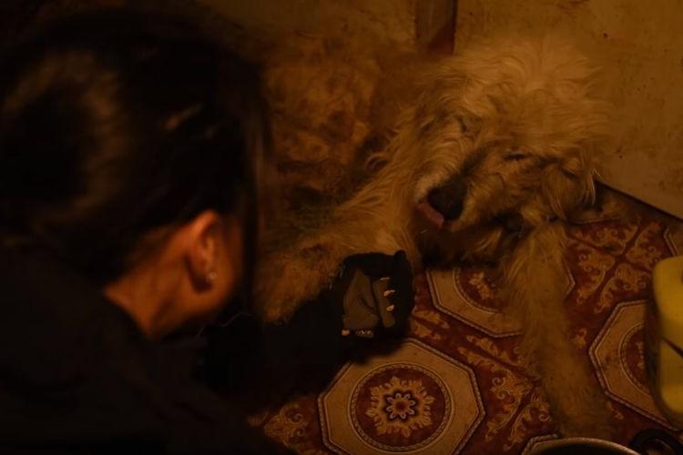 悪質ブリーダーによって劣悪な環境で育った1匹の犬が救出され感謝の「お手」を。