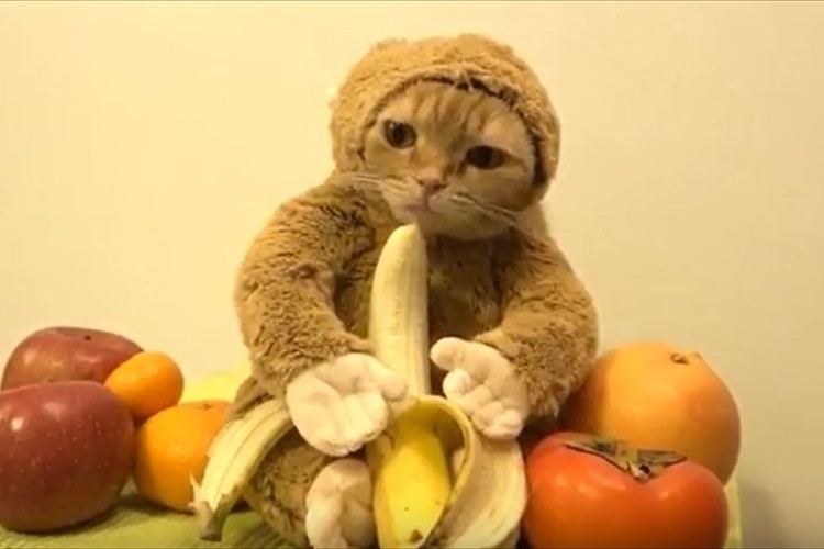 """【動画】「バナナでも食べるか…」申年にちなんで""""サルのぬいぐるみを着た猫""""が話題に!"""