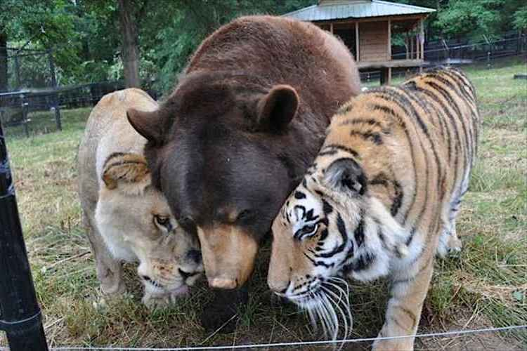深い絆で結ばれた3頭はいつも一緒!凄惨な子ども時代を乗り越えた3頭の種族を越えた友情!